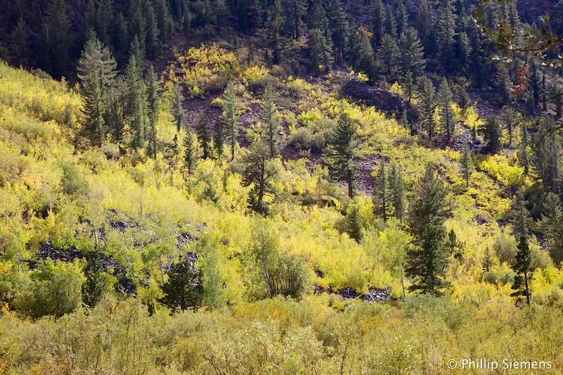 Hillside at Lundy Lake