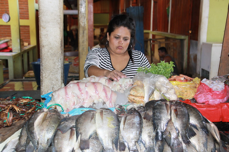 Fish in market in Grenada