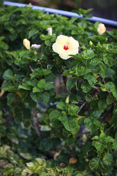 Kauai_D2_AM 129.jpg
