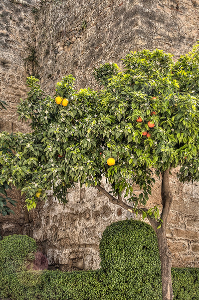 Orange  Tree  Marbella
