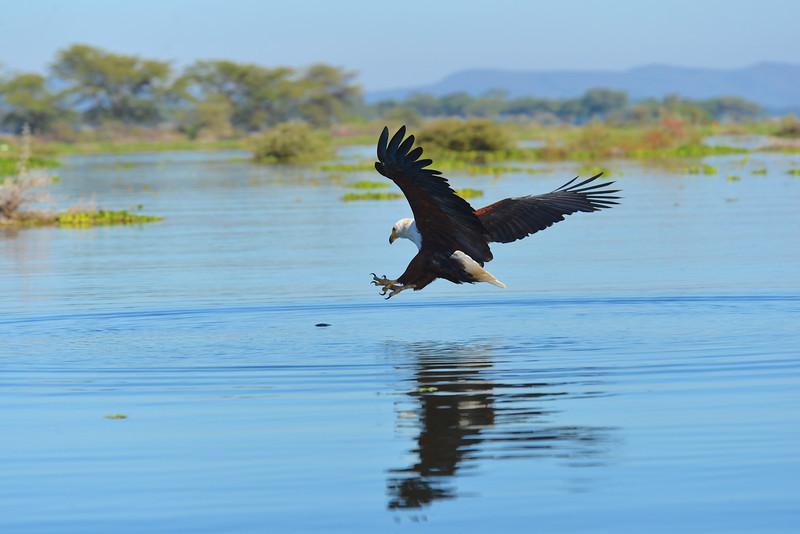 East Africa Safari 148.jpg