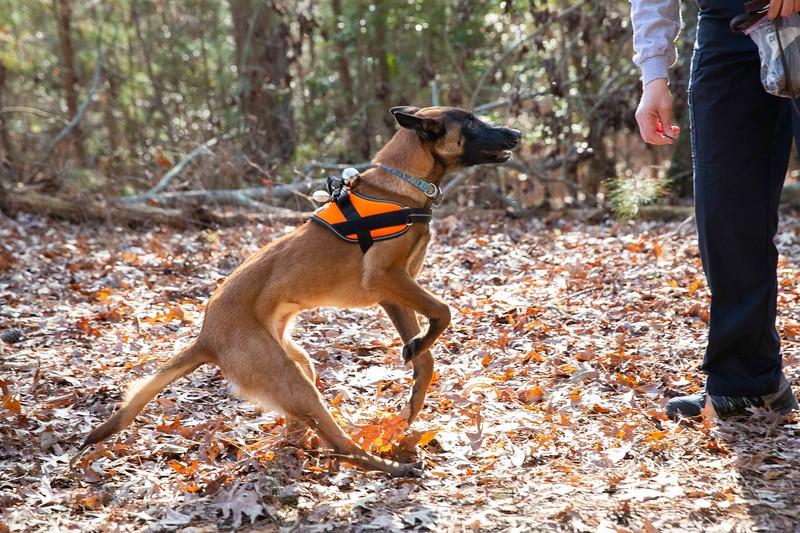 Stella 12-2019 Woods search training (155).jpg