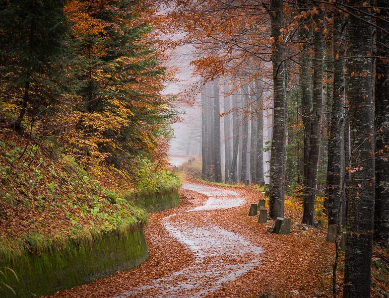 Slov autumn 56.jpg