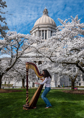 Harp Musician State Capitol Blossom Trees