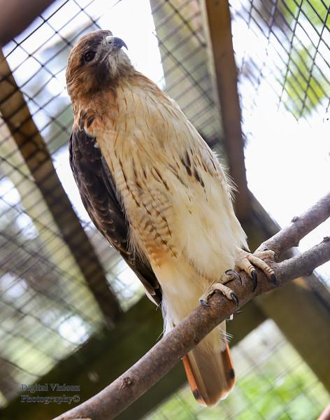 2016-07-17 Fort Wayne Zoo 1000LR.jpg