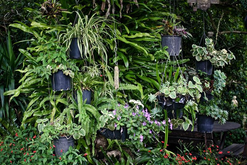 garden (58).jpg