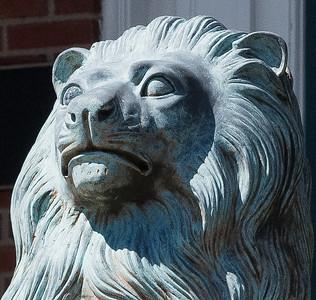 2021 05 11: Neighborhood Walk, Lion, Flora