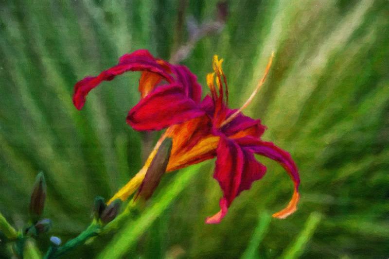 September 27 - Fall flower.jpg