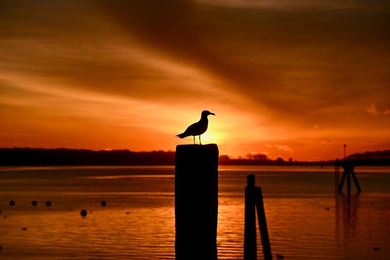 Seagull Sunrise.jpg
