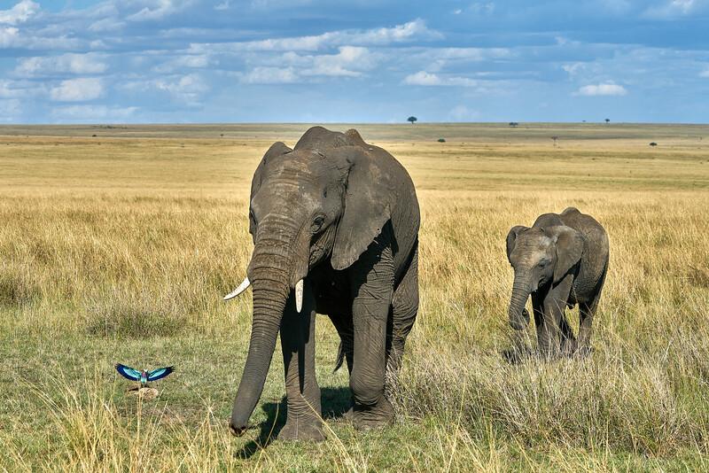 Maasai Mara_DSC08917.jpg