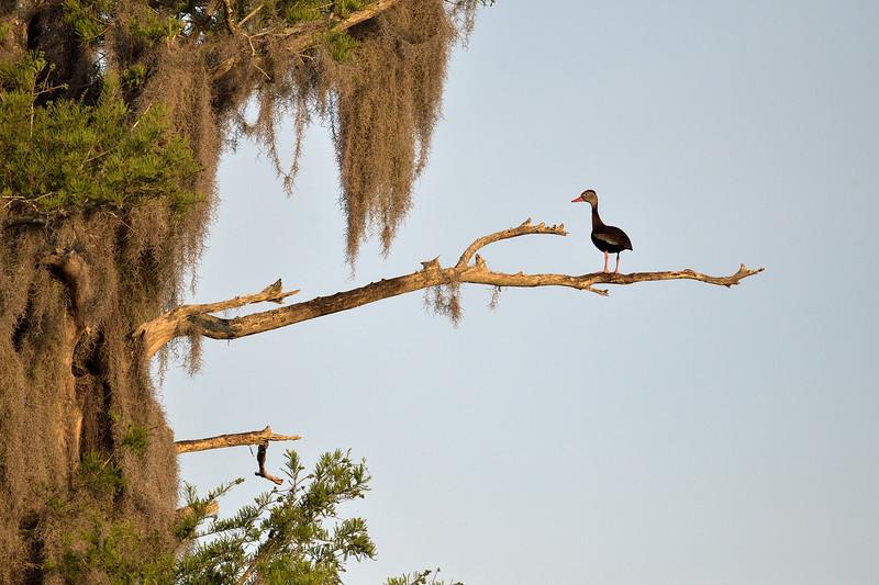 2021_KSMetz_Florida_Osprey Trip_April07_NIKON D850_4563.jpg