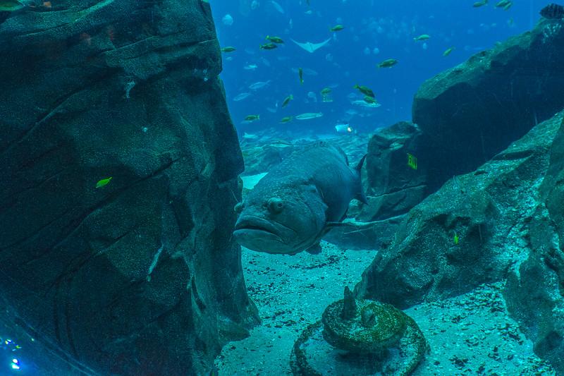 GA Aquarium with Linc, Ali & Abe-59.jpg