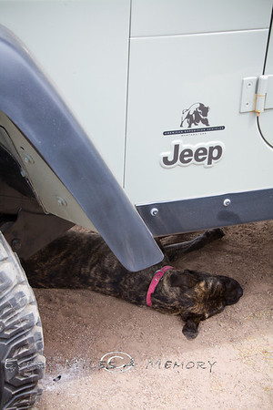 Dogs of Overland EXPO