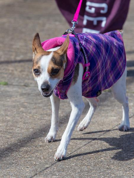 Richmond Spca Dog Jog 2018-757.jpg