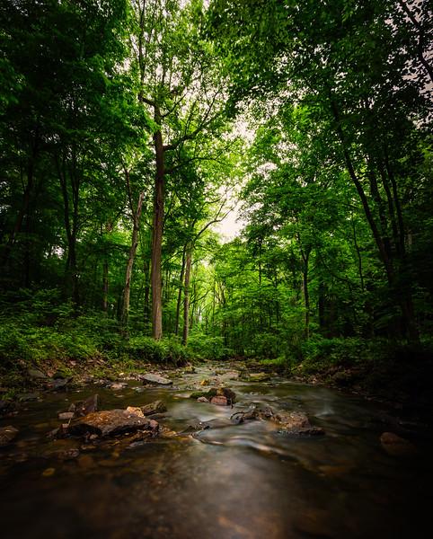 Mike Maney_Rainy Day Landscape-19-Edit.jpg