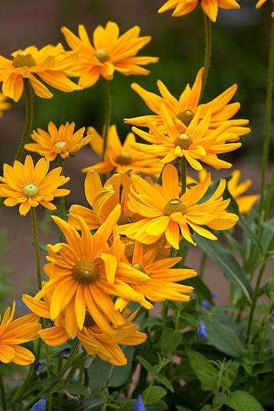 Botanicgarden12-0902.jpg