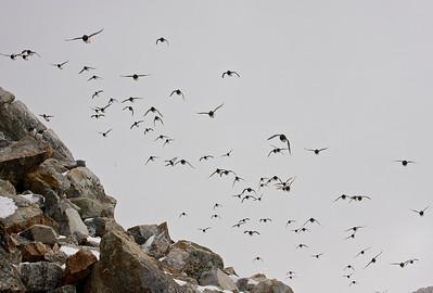 ... in Svalbard