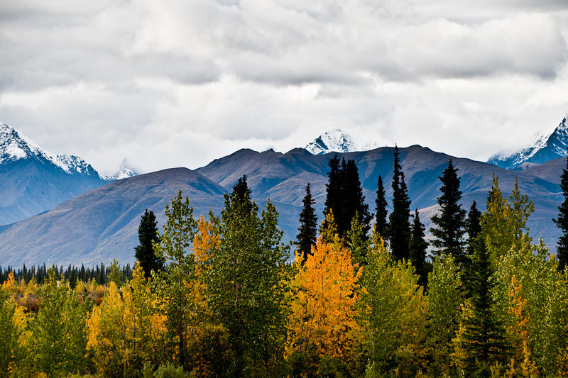 Highway to Denali north of Anchorage.