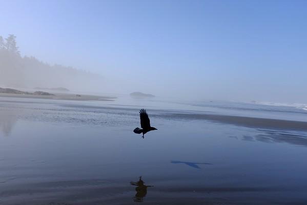 Ruby Beach/Washington Coast