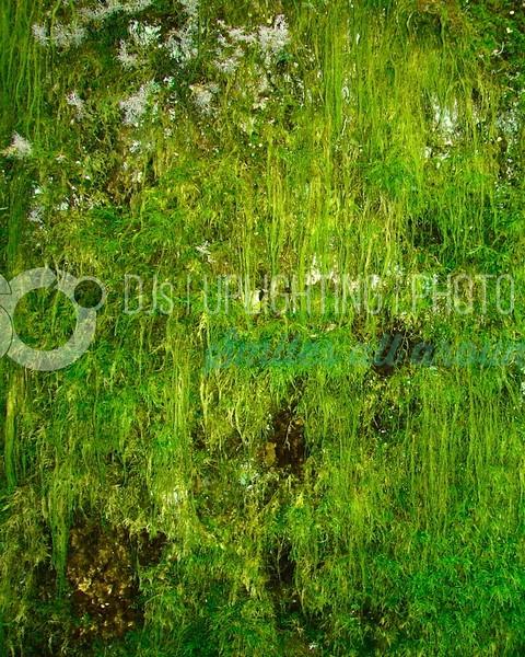 Hanging Moss_batch_batch.jpg