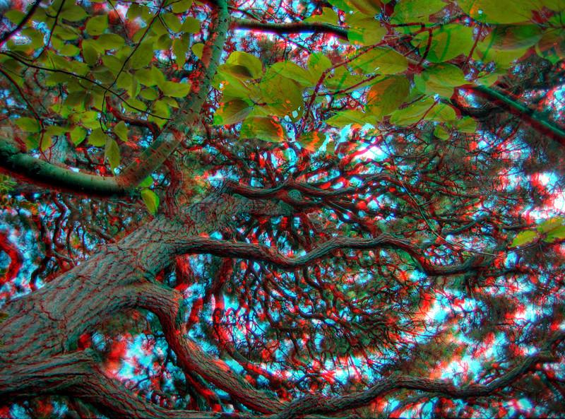 AC_SOPH_HDR_17.jpg