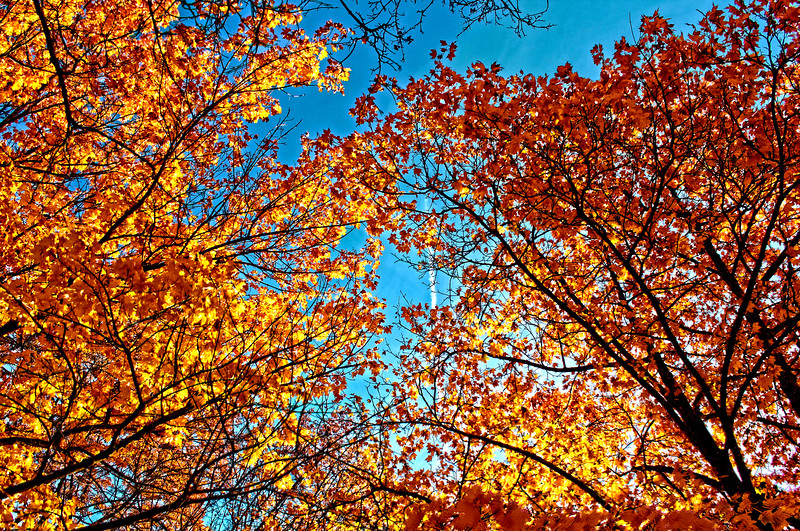 Fall_Colors_HDR12.jpg