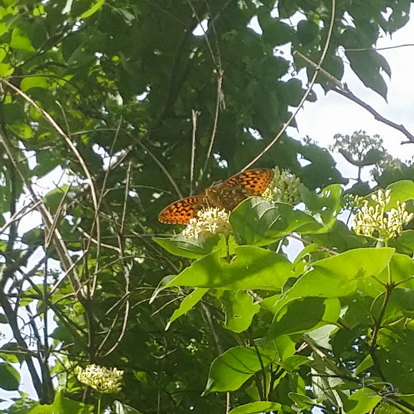 Butterfly visiting