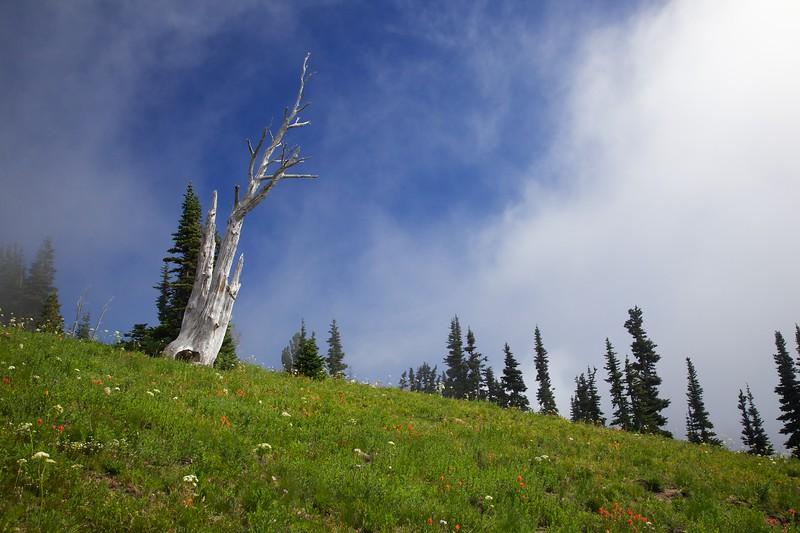 Wildflower covered meadow and dead tree. Sunrise area, Mount Rainier National Park, Washington.