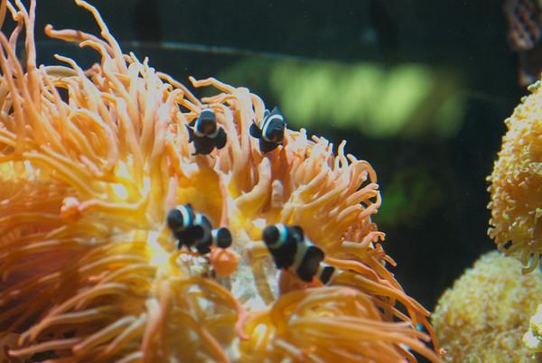 Monterey Aquarium - 2015