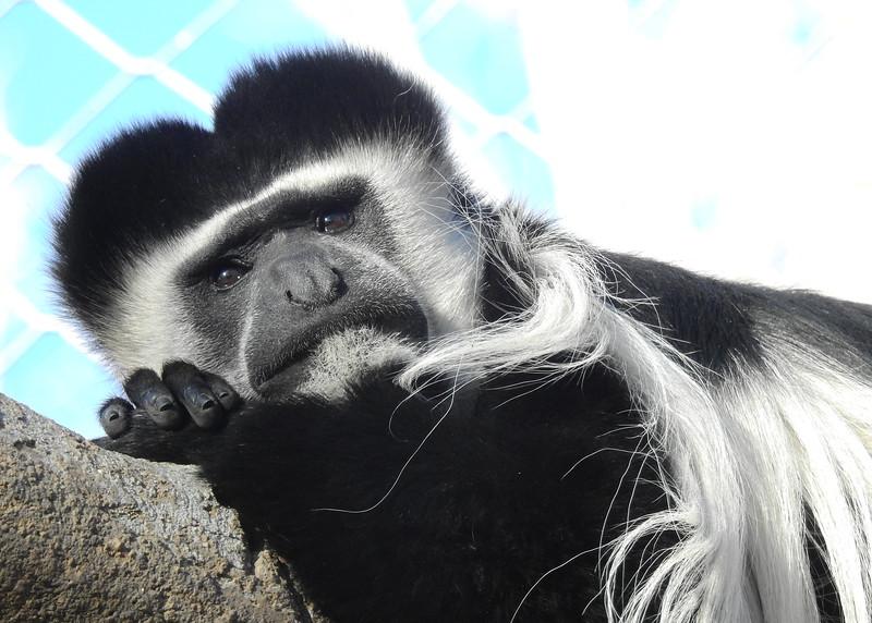 Denver Zoo 2018 (2634).JPG