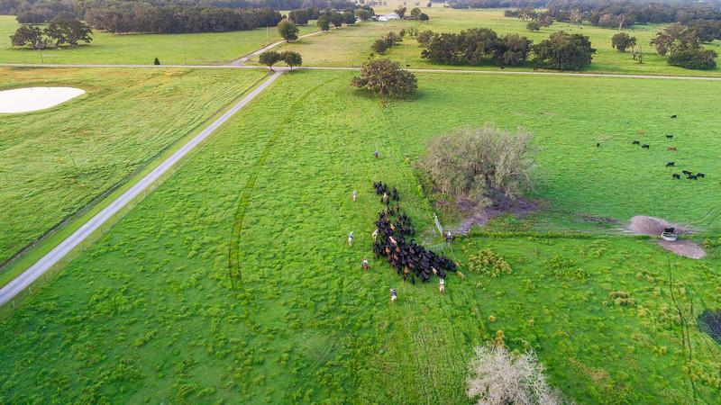 Barthle Cattle  (20 of 27).jpg
