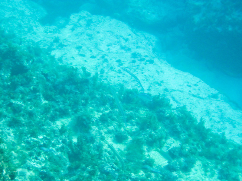 20101224-043337_BE7f_Canon PowerShot D10.jpg