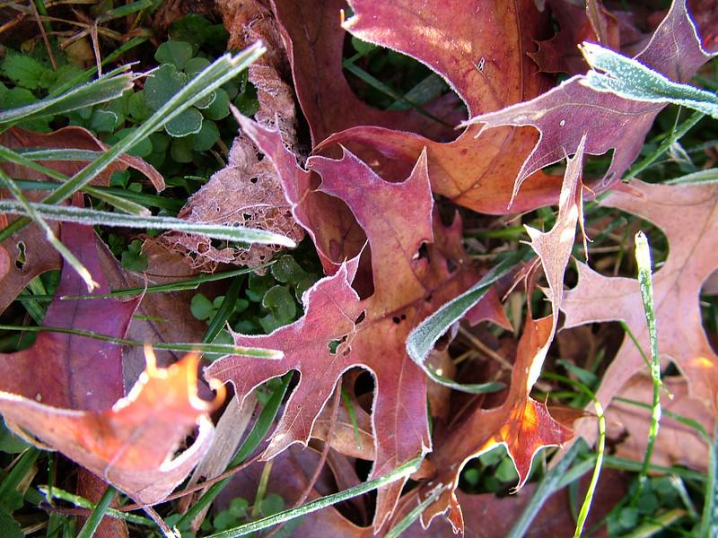 leaves play.jpg