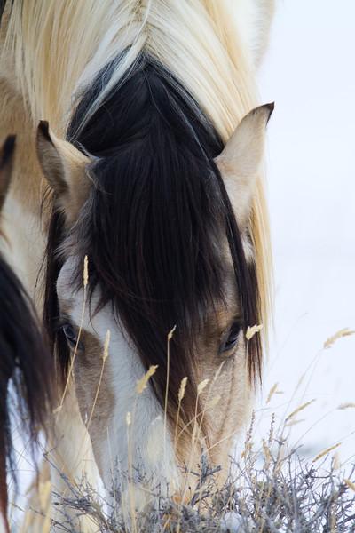 wild horses148.jpg
