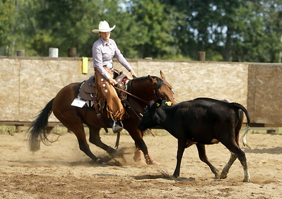 Hästar/ Horses