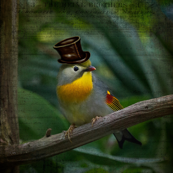 tophatbird.jpg
