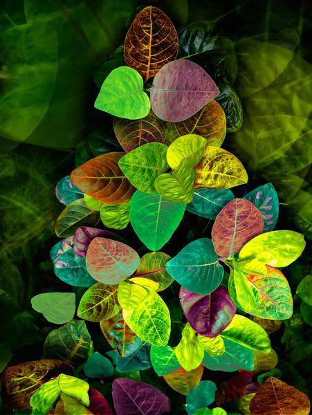 Leaves3-PRT.jpg