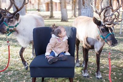 ReindeerManley