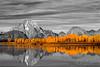 Orange Reflection