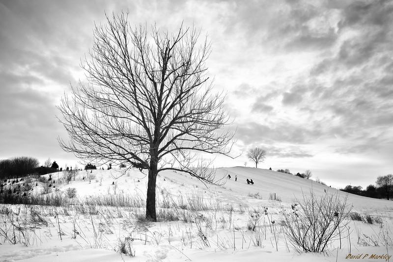 Frozen View