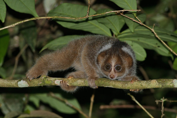 2012 October Malaysia/Borneo (Sabah)