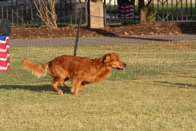 11-4-2018 Border Terrier-2660.jpg