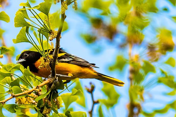 Spark Birding