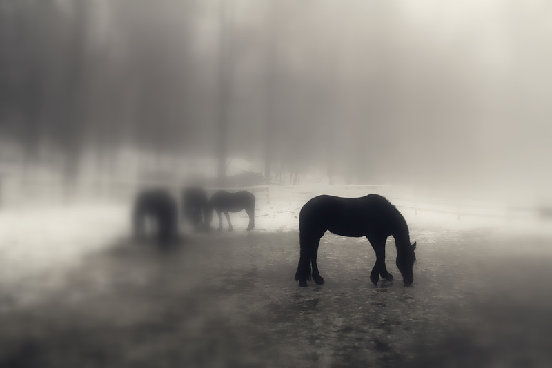 Winter Horse2.jpg