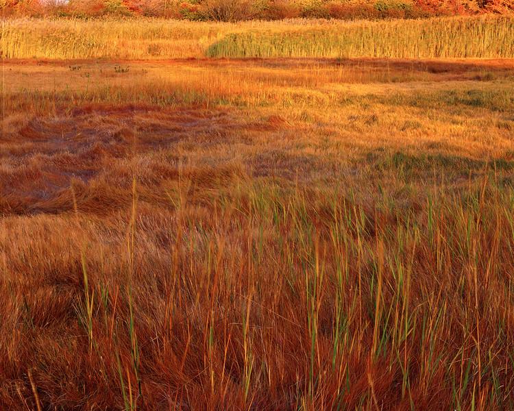 Salt Meadow III