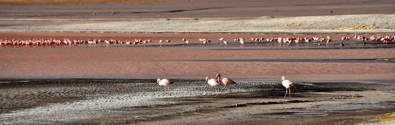 BOL_2516-Red Lake-Flamingos.jpg