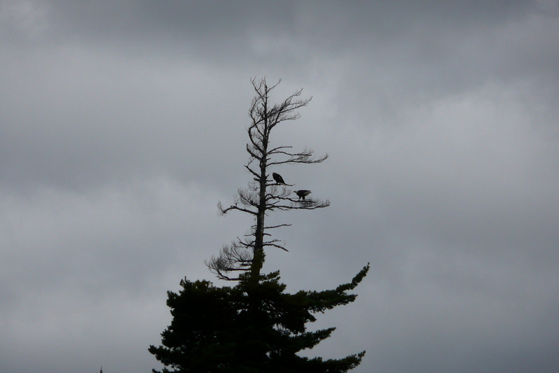 Silent Observers. Lac Jean-Peré, La Vérendrye Wildlife Reserve