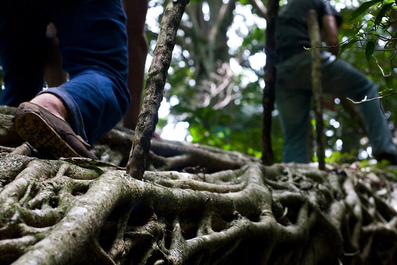 climbing_4808987611_o.jpg