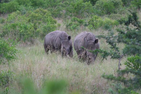 South Africa Part 6