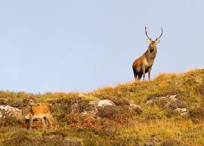 Mull Wildlife